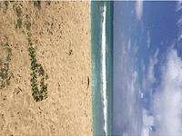 Photo of Ewa Beach, HI 96706